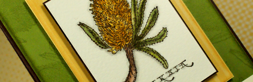 bloom-away-banksia-so-olive-line.jpg